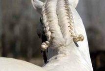 trenza caballo