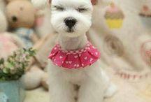 Too bloody cute!