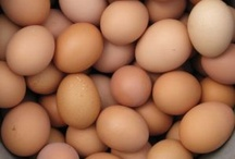 Operation Chicken / Lucky chickens eat bugs, provide eggs, and get lots of protection and love