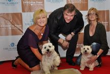 Celebrity Guests / The Barkley Pet Hotel and Day Spa has celebrity pets from all over the world as guests!
