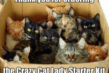 TOPIC: CAT 2 / by Caty Gonzalez