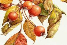 Láminas botánica y flores