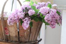 i love lilacs....... / by Ilsé McCarthy