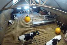 Peter's Farm YouTube (Dutch)