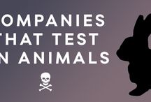 Companies who test on animals