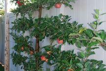Fruit tree design