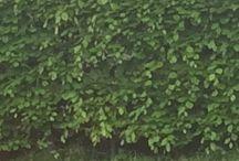 Naturens grønne ting