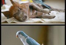 strange animal friends