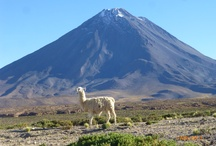 Hidden Treasures of South America - Argentina, Uruguay, Chile and Bolivia / by ElderTreks