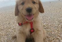 Puppy / by Amy Runaas
