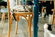 Romeow Cat Bistrot in Rome