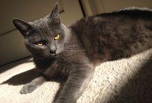 Smokey / My wonderful and playful kitty / by Renata Barboza-Murray