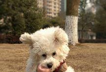 Doggy info
