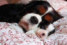 Cuteness / Dogs, Cats, Pets, Animals We love our furry friends.