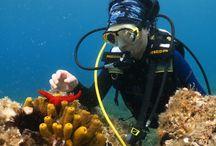 Ayvalık dalış hatırası / www.idadiving.com Ayvalık dalış okulu - ida dalış merkezi