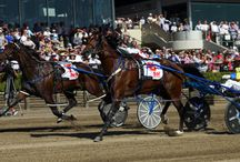 Harness Racing / All things, Pacing, Trotting, Racing, and Horses.