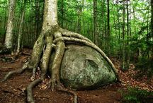 Strong or/and strange trees