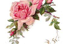 keret virág színes / frame flowers Vintage transfer transzfer colorful