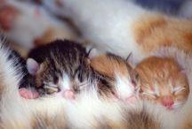 Opieka nad potomstwem u kotów