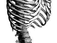 Disegni anatomici