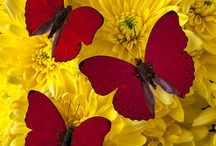 pinturas con flores