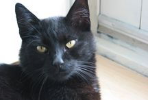 Katten / Kattenpret