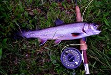 Fly Fishing Tips / Helpful hints and ideas for your time on and around the water.