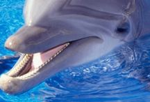 Animals | Dolphins