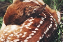 *~Life~* / Bilder på djur helt enkelt:)