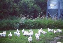 Pine View Farms' Blog