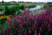 Wetland landscapes