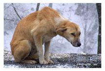 Собако-вдохновение / О вдохновении в собаках, волках и лисах.  Без слов.