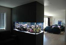 fish tank in wall