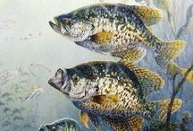 Crappie tips and pics