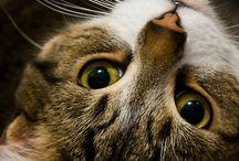 CATS / by Rachel Butler
