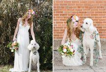 Wedding | Pets