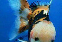 FISHIEST OF FISHIES