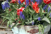 Front yard gardening / by Susan Crump