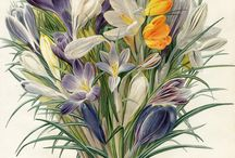 BOTANICAL PAINTINGS