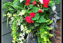 Container Gardening / Plants, flowers