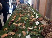 """Expositions """"Champignons"""" / Chaque année, les mycologues du service de Pharmacognosie et Biologie végétale, avec l'aide de leurs étudiants, présentent une exposition de champignons dans le hall d'honneur de la Faculté de Pharmacie de Paris. A cette occasion, plusieurs documents sur ce thème sont présentés dans la salle Dorveaux du Pôle Pharmacie de la BIU Santé."""