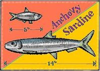 Food on Friday: Anchovies & Sardines / this link up is now on!  Go to Carole's Chatter - http://caroleschatter.blogspot.co.nz/2013/07/Anchovy-sardine-recipe-links-Food-Friday.html to link in (or click through the first pin to get there)