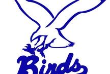 Base- and Softball Club Birds