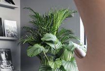 Green Machine | Thuis Interieurontwerp