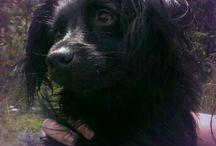 My dog Guusje