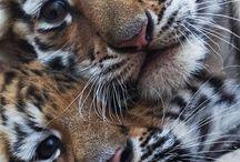 Cubs ❤️