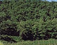 German Vineyards