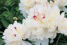 In my garden - Summer! / by Lisa Sanner