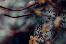 Inspirational & Pretty Photos