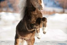 Horse luv